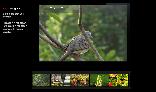 Dynamic Photo Gallery