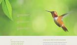 Birdy template