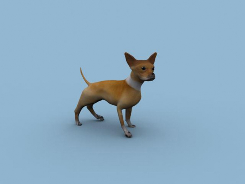 Chihuahua Dog animated model FBX & Max2010 format