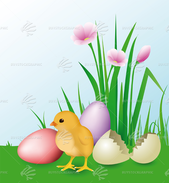 Newly Hatched Chick & easter eggs