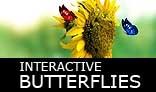 3 butterflies