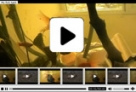 H.264/ .f4v Xml Video player V3