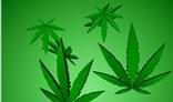 Marijuana Falling