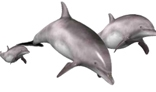 Dolphin Swimming Animation