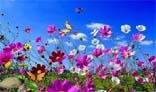 Diffеrent Butterflies