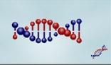 DNA chainlet