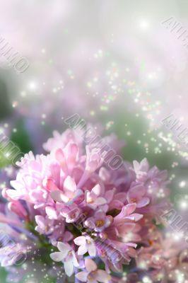 Fairy dust on lilac