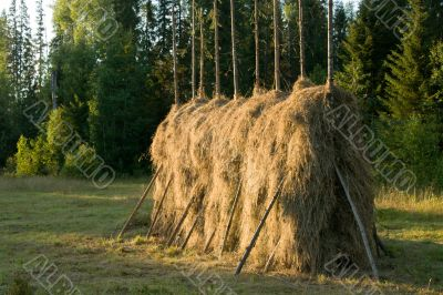 Hay. The nature. Object.