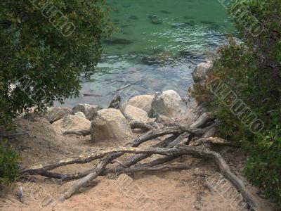 Water landscapes
