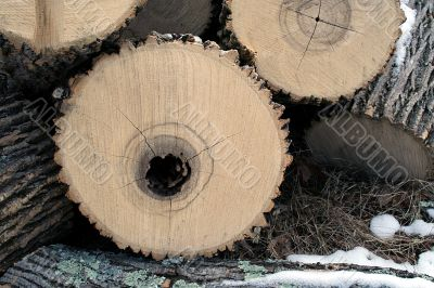 Hollow Log