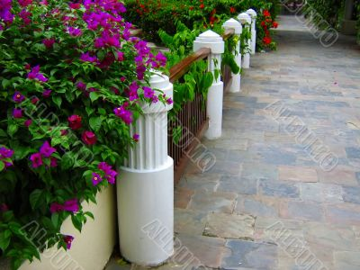 beautiful tropical walkway