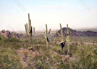 Arizona Desert Vista to the mountains