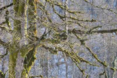 branches covered with moss