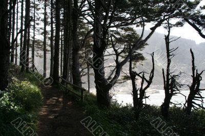 Beach trail: silhouettes