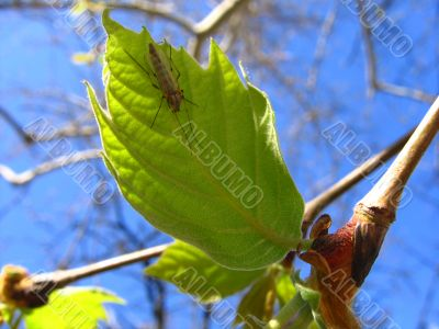 Leaf and insect