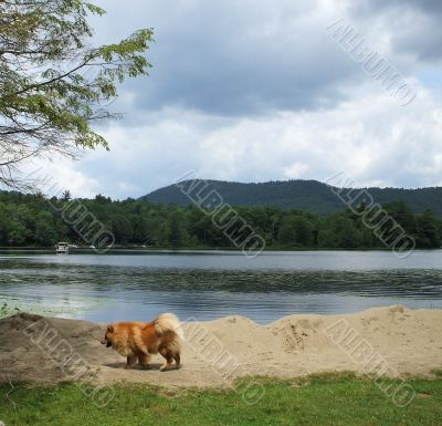 Pet Dog Exploring Lake