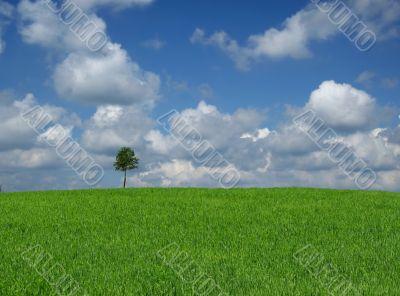 lone tree with cumulus clouds