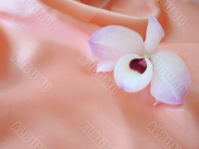 Orchid on pink satin - 2