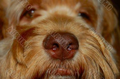 extreme dog nose