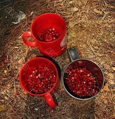 mugs with berry, illuminate sun rays