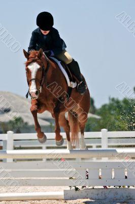 Jumping Horse and Rider