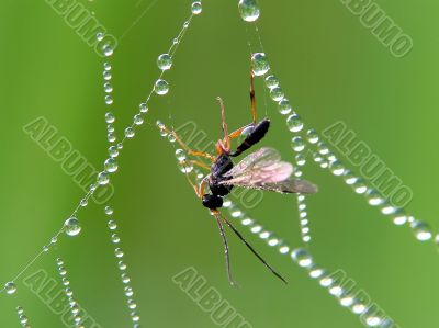 Insect and cobweb
