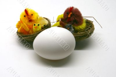 White egg with the chick