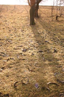 Shadows tree, sun, grass and winter ground.