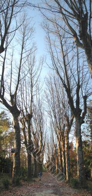 Platan Path