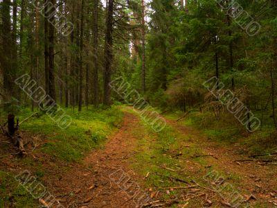 Wilderness footpath