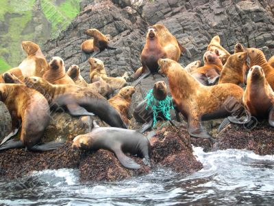 Sea animals in game reserve on island Moneron.