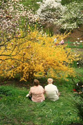 aged couple contemplating blossom of nature