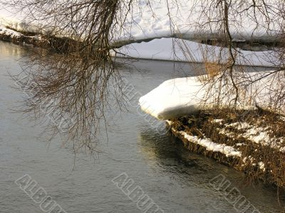 a tree branch over the water