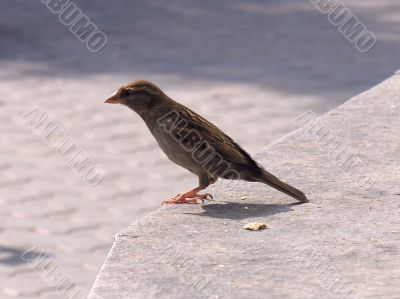 small sparrow birdie at the Moscow Zoo