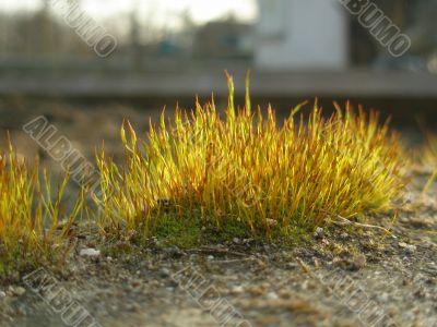 extra closeup of moss