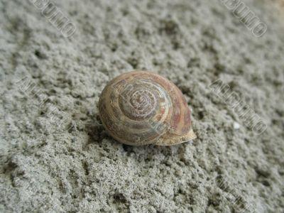 closeup of snail shell