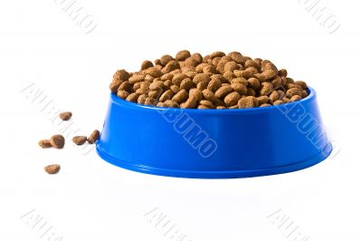 Pet`s bowl with meal
