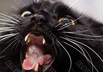 Black cat crop