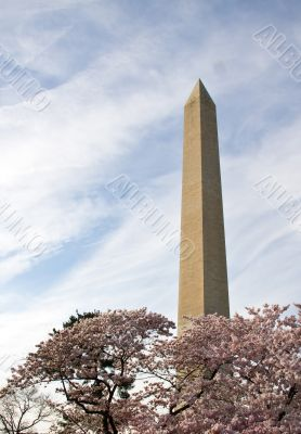 Washington Monument with branches of cherry blossom