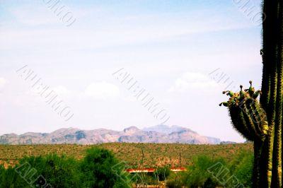 Arizona Desert Hills and Cactus
