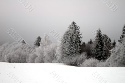 Winter trees and bushes with hoarfrost