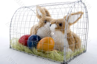 Easter bunny in a cage