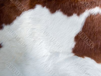 real cow skin texture