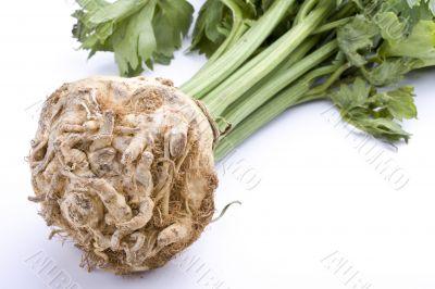 celery root plant