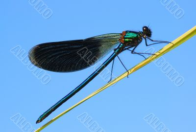 The dragonfly has a rest.