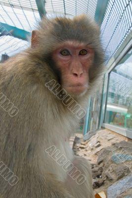Monkey in a zoo