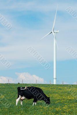 cow eating near a windturbine