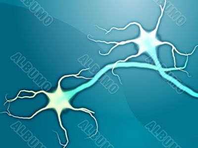 Neuron nerve cells