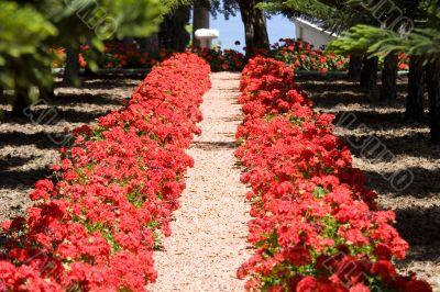 bahai gardens north of Israel