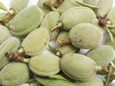 Crop of young unripe almonds nuts